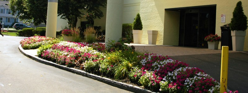 Holiday Inn Landscaping